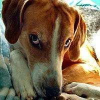 Adopt A Pet :: WILLIE - Hampton, VA