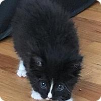 Adopt A Pet :: TEDDY - Lakewood, CA
