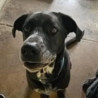 Adopt A Pet :: Sisko - Colfax, IL
