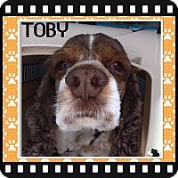Adopt A Pet :: Toby - Santa Barbara, CA