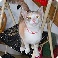 Adopt A Pet :: Patty - Jackson, MS