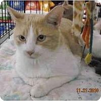 Adopt A Pet :: Timmy - Riverside, RI