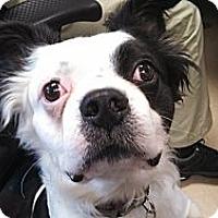 Adopt A Pet :: Poe - Temecula, CA