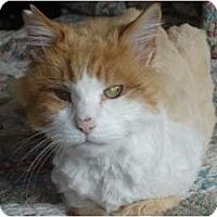 Adopt A Pet :: Tamone - Chesapeake, VA