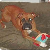 Adopt A Pet :: Journey - Albany, GA