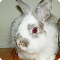 Adopt A Pet :: Bolt - North Gower, ON