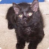 Adopt A Pet :: Bear - Colorado Springs, CO