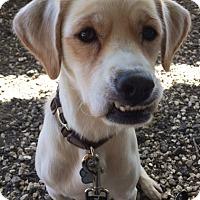 Adopt A Pet :: Wiley - Sugarland, TX