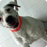 Adopt A Pet :: Petunia - Erwin, TN