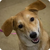 Adopt A Pet :: Ella Q - Hillside, IL