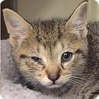Adopt A Pet :: Leah - Springdale, AR
