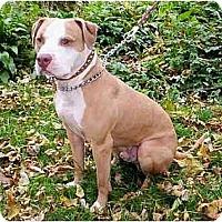 Adopt A Pet :: Payton - Chicago, IL