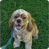 Adopt A Pet :: Quincy - Tacoma, WA
