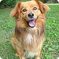 Adopt A Pet :: Alvin - Mocksville, NC
