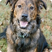 Adopt A Pet :: Tucker - Hagerstown, MD