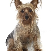 Adopt A Pet :: Jeana - Fort Lauderdale, FL