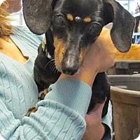Adopt A Pet :: Cricket - Chesterfield, VA