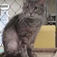 Adopt A Pet :: Kineta - Pottsville, PA