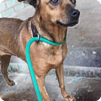 Adopt A Pet :: Lulu - Holly Springs, MS