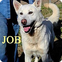 Husky Mix Dog for adoption in Halifax, North Carolina - Job