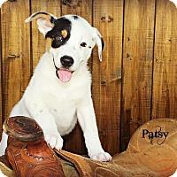 Adopt A Pet :: Patsy - Austin, TX