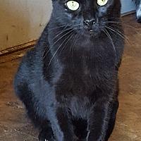 Adopt A Pet :: Tara - Rockford, IL