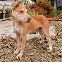 Adopt A Pet :: Rudy - Tyler, TX