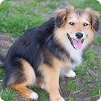 Adopt A Pet :: Sparky - Westport, CT