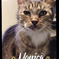 Adopt A Pet :: Monica - Hartford City, IN