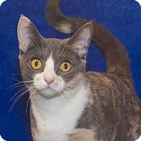 Adopt A Pet :: Sasha - Elmwood Park, NJ