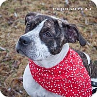 Adopt A Pet :: LACEY - Prospect, CT
