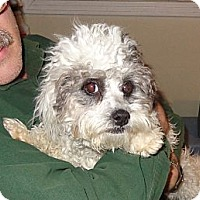 Adopt A Pet :: Pepper - Glastonbury, CT