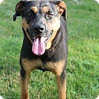 Adopt A Pet :: Samantha - Hastings, NY