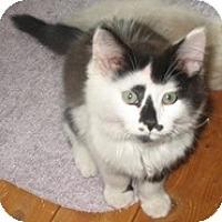 Adopt A Pet :: Lucky Duck - Shelton, WA