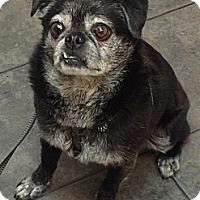 Adopt A Pet :: Ollie - Hinckley, MN
