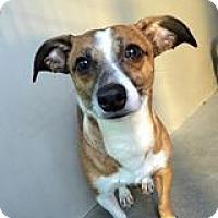 Adopt A Pet :: Milo - Anaheim, CA