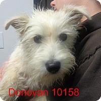Adopt A Pet :: Donovan - baltimore, MD