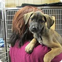 Adopt A Pet :: Jiminy Cricket - Millersville, MD