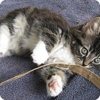 Adopt A Pet :: Newton - North Highlands, CA