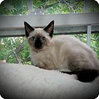 Adopt A Pet :: Bromley - Fairborn, OH