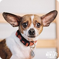 Adopt A Pet :: Casey - Portland, OR