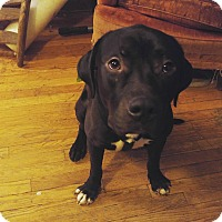 Adopt A Pet :: Smokes - Chicago, IL