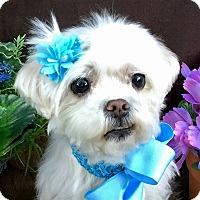 Adopt A Pet :: Happy - Irvine, CA