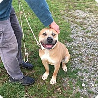 Adopt A Pet :: Butch - Covington, TN