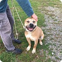 Adopt A Pet :: Butch - Covington, TN