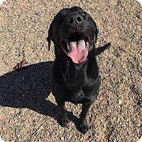 Adopt A Pet :: Rugar - Douglas, WY