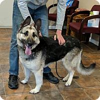 Adopt A Pet :: Juno - Lisbon, OH