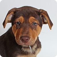 Adopt A Pet :: Wheels - Walnut Creek, CA