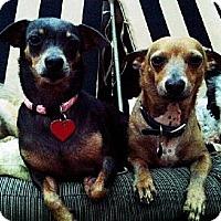 Adopt A Pet :: Charlie - Downey, CA
