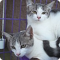 Adopt A Pet :: Grayson - Acme, PA